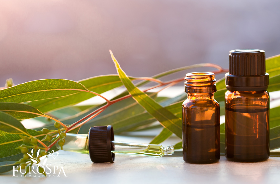 How to Get Rid of Headaches and Migraines Using Eucalyptus Oil