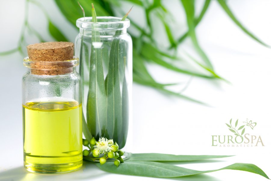 Astonishing Benefits of Eucalyptus in Massage Therapy