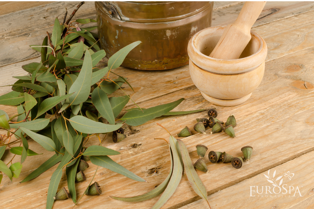 Why Fall Is the Best Time to Use Eucalyptus Oil
