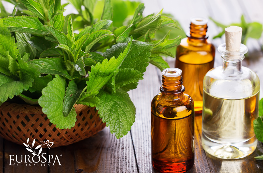 Top Benefits of Peppermint Oil