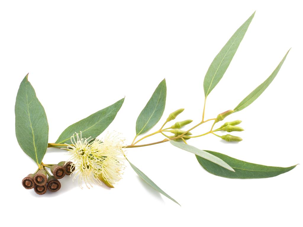 Eucamist Blend Eucalyptus Oil
